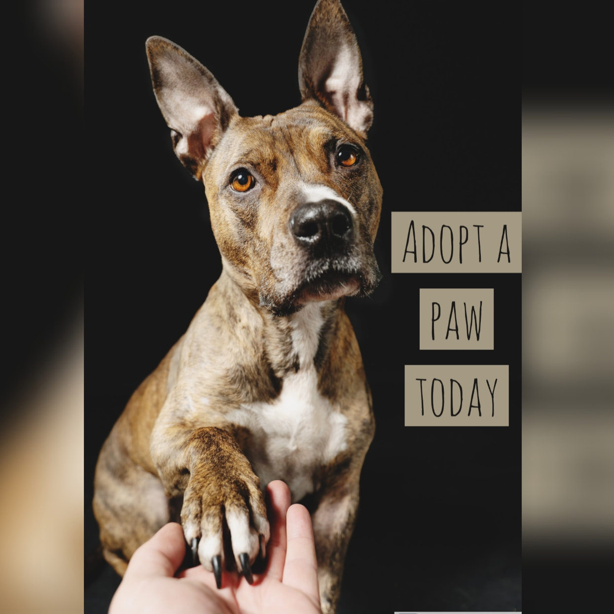 adopt a paw today